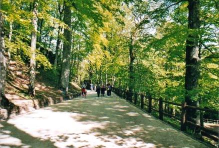 sentieri-nei-boschi