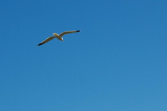 seagull-14719_640